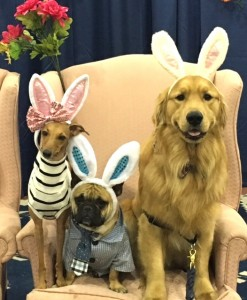 Celebrity-Dogs-Iggy-Joey-Mr-Marcel-and-Jaxson-The-Golden