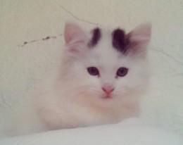 Cute kitten mickey-300x300