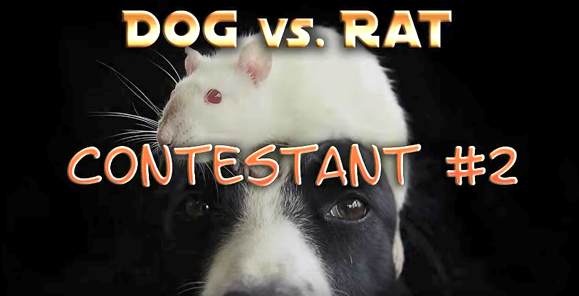 Amazing Cat Versus Dog Versus Rat Trick Contest