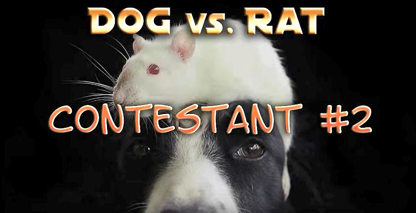 Amazing Cat Versus Dog Versus Rat Trick Contest