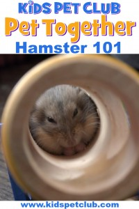 Get to know what a hamster is with mimi and finley