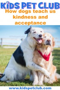 How dogs can teach us about kindness and acceptance