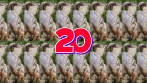 KPC 20