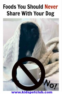 20 Foods You Should Never Share With Your Dog KPC Pin featuring Kilo the pug on the couch with coffee