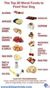 20 Foods should never share with your dog if you want to keep them safe and healthy- infographic on KPC