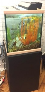 Ted's fish tank