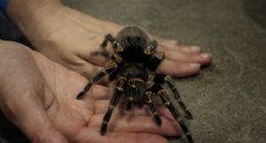 Zoe's Spider