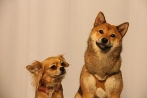 dogs jacqueline