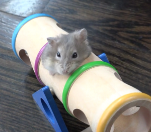 hamster in tunnel