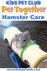 how to take care of hamsters with mimi and finley