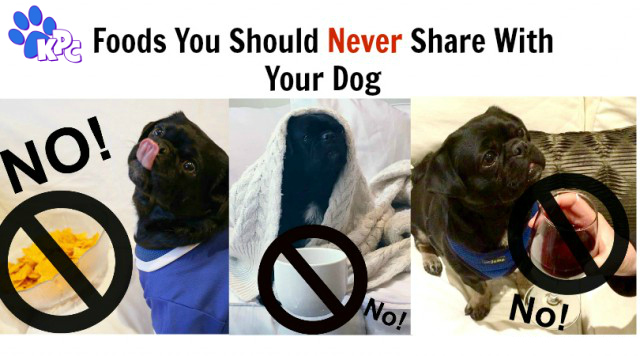 20 Foods You Should Never Share With Your Dog