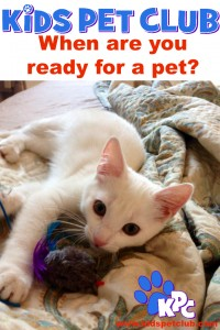 when are you ready for a pet