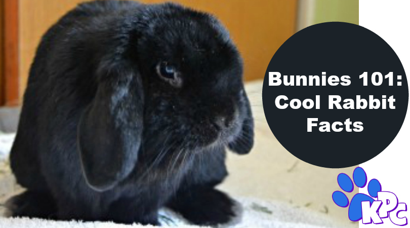 Do You Know These 10 Fun Facts About Rabbits?