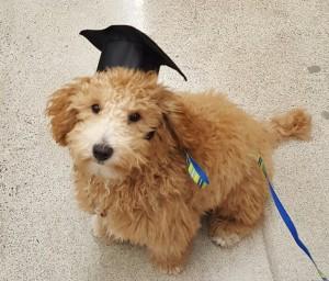 Ollie Graduates Training Class - Edited