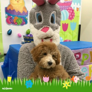 Ollie with the easter bunny