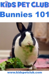 Read these cool fun facts about rabbits