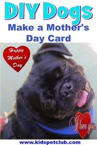 Watch this short simple video on how to use our collage maker to make a cute mother's day card