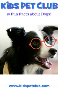 10 fun facts about dogs for kids with professor know it all