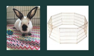 Rabbit in exercise pen