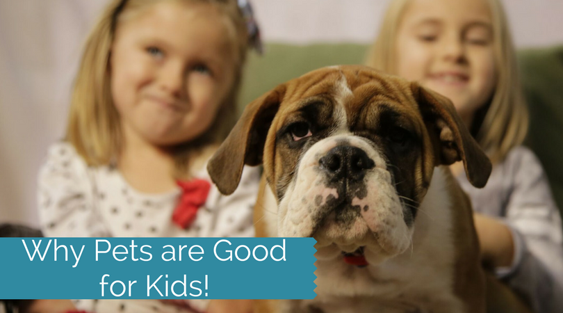 The Reasons Why Pets Can Be Really Great For Kids