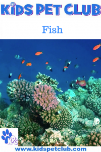 fish pin for kids pet club with a tank of exotic fish