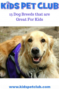 13 best dog breeds for kids best dogs for families
