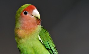 Facts about Beautiful Pet Birds