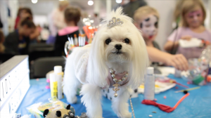 Ms. Charmin on the table with kids at Fall Canadian Pet Expo