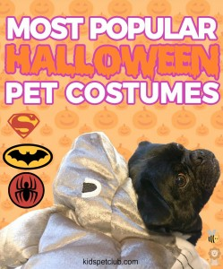 Check out the Most Popular Halloween Costumes for Kids and Pets in 2017 KPC