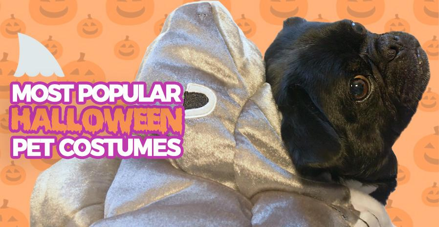 10 Most Popular Halloween Costumes for Pets & Kids