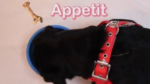 Pet Jokes Bone Appetit