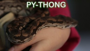 Pet Jokes Pythong