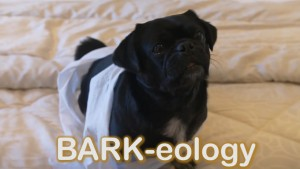 Pet Jokes- dogs study barkeology